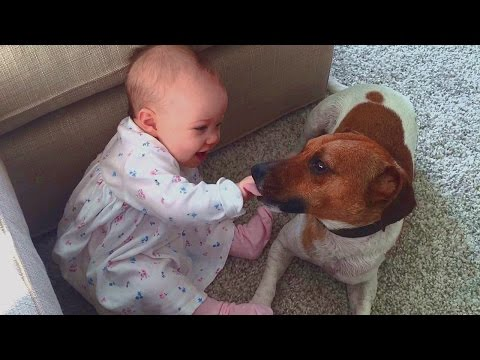 Cute Jack Russell Terrier tries to make Baby laugh - Dog always loves Baby