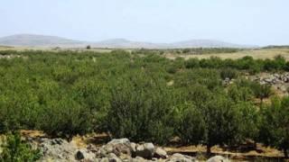 جبل السنديان - اغاني تراثية جبل العرب السويداء