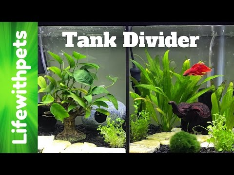How To Install Our Betta Tank Divider. (Now Available For Purchase!)