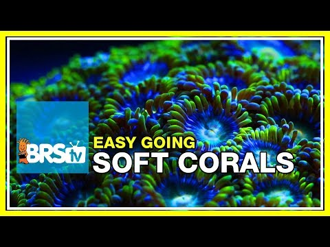 Week 35: SOFT CORALS! Selection, Care, Andplacement| 52 Weeks Of Reefing