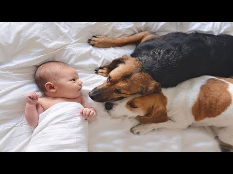 Introducing Dogs To Newborn baby for the first time | Dog loves baby Video