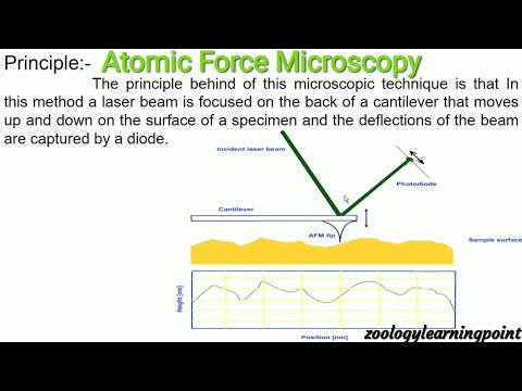 AFM/Atomic Force Microscopy