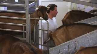 Cerise et Potiron : producteur de fromage de chèvre