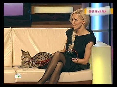 Саванна F1 питомника LUNICORNE (TV НТВ Говорим и показываем)