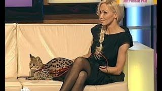 Саванна F1 питомника L'UNICORNE (TV НТВ Говорим и показываем)