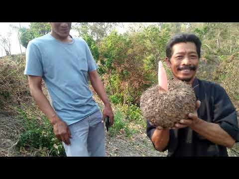 PPCI , Porang Bersama Pak Suwandi Pagu PPCI Dan Mas Gatot PPCI Simpang 5 Kediri , By: MPM