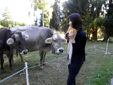 TANAKA AT PLANATSCH PLAYS WITH THE COWS
