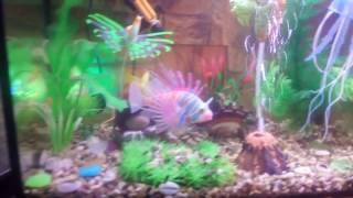 Декоративный аквариум с искусственными рыбками