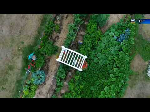 Sights and Sounds Drone Edition: Ole's Farm in Mecosta County