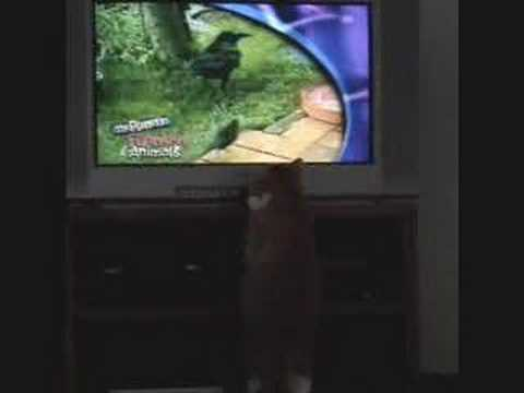 My Cat Watching Planet's Funniest Animals x.x - YouTube