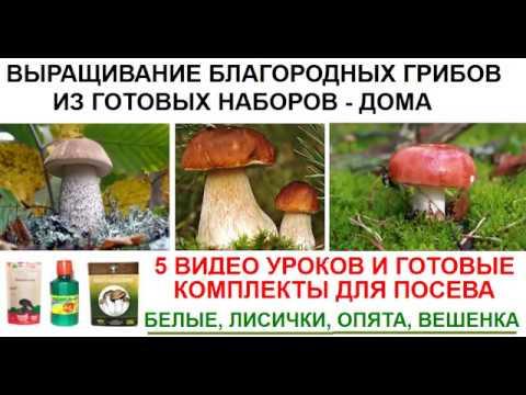 Бизнес на выращивании грибов. Как выгодно продать свою