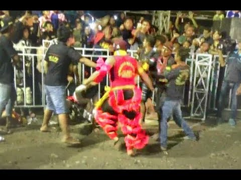 BANTENG GALAK DUEL DENGAN PENONTON---SERU---Bantengan Margo Budoyo Live Ngringin Lengkong 2018