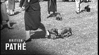 Ladies Kennel Club Show At Cheltenham (1938)