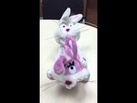 секс кроликов н видео