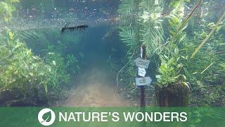 Nature Path Submerged by Rare Phenomenon