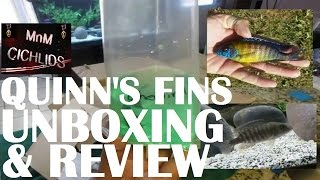 Awesome Quinn's fins Review, online fish shopping.