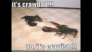 Crawdads 12 15