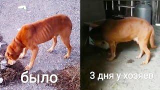 Исхудавший пес у новых хозяев 3 день