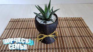 Оригинальный подарок своими руками из кокоса. Рукоделие. Поделки✔️Planter DIY