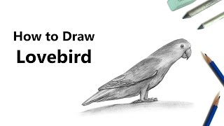 How to Draw Love Birds with Pencils [Time Lapse]