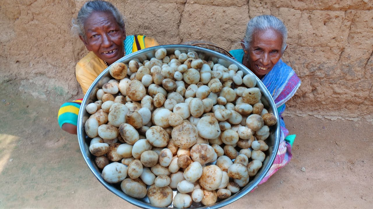 Most expensive Truffles Mushroom collect and cooking by santali tribal grandmothers   tribal food