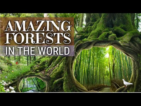 7 Most Amazing Forests In The World