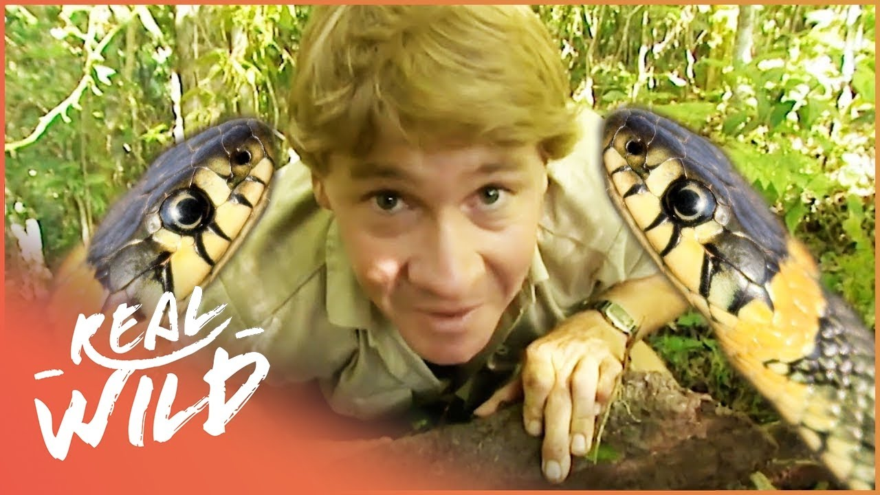 The Ten Deadliest Snakes In The World - With Steve Irwin | Real Wild Documentary