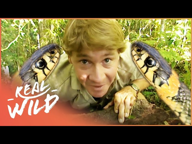 The Ten Deadliest Snakes In The World - With Steve Irwin | Wild Things Documentary