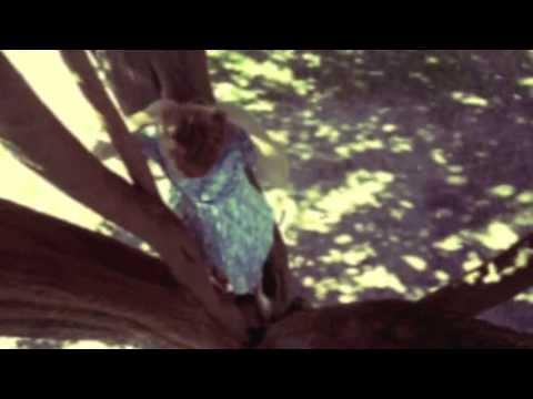 Sam Buckingham - Follow You