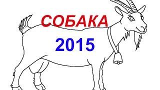 ГОРОСКОП - СОБАКА в 2015 году - Астротиполог Дмитрий Шимко