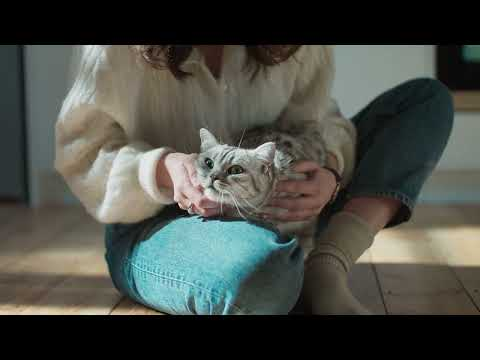 """Whiskas campaign """"Purr more""""  by AMV BBDO"""