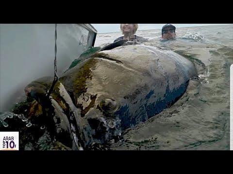 ظنو أنها سمكة عادية لكن عندما إستخرجوها من الماء كانت الصدمة سبحان الخالق..!!!