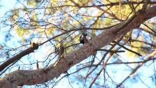 Природа в Семеновке(г.Семеновка, Черниговская область Автор: Игорь Стародубец 2015 год., 2015-02-11T21:48:31.000Z)