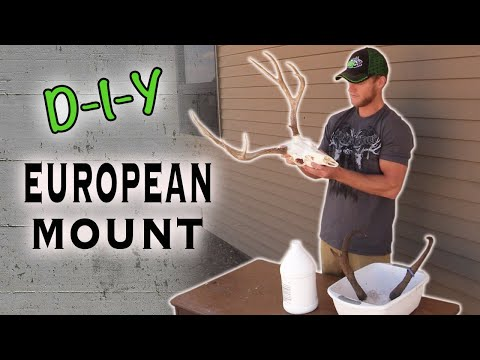 Skull Cleaning - Do-It-Yourself Big Game European Mount