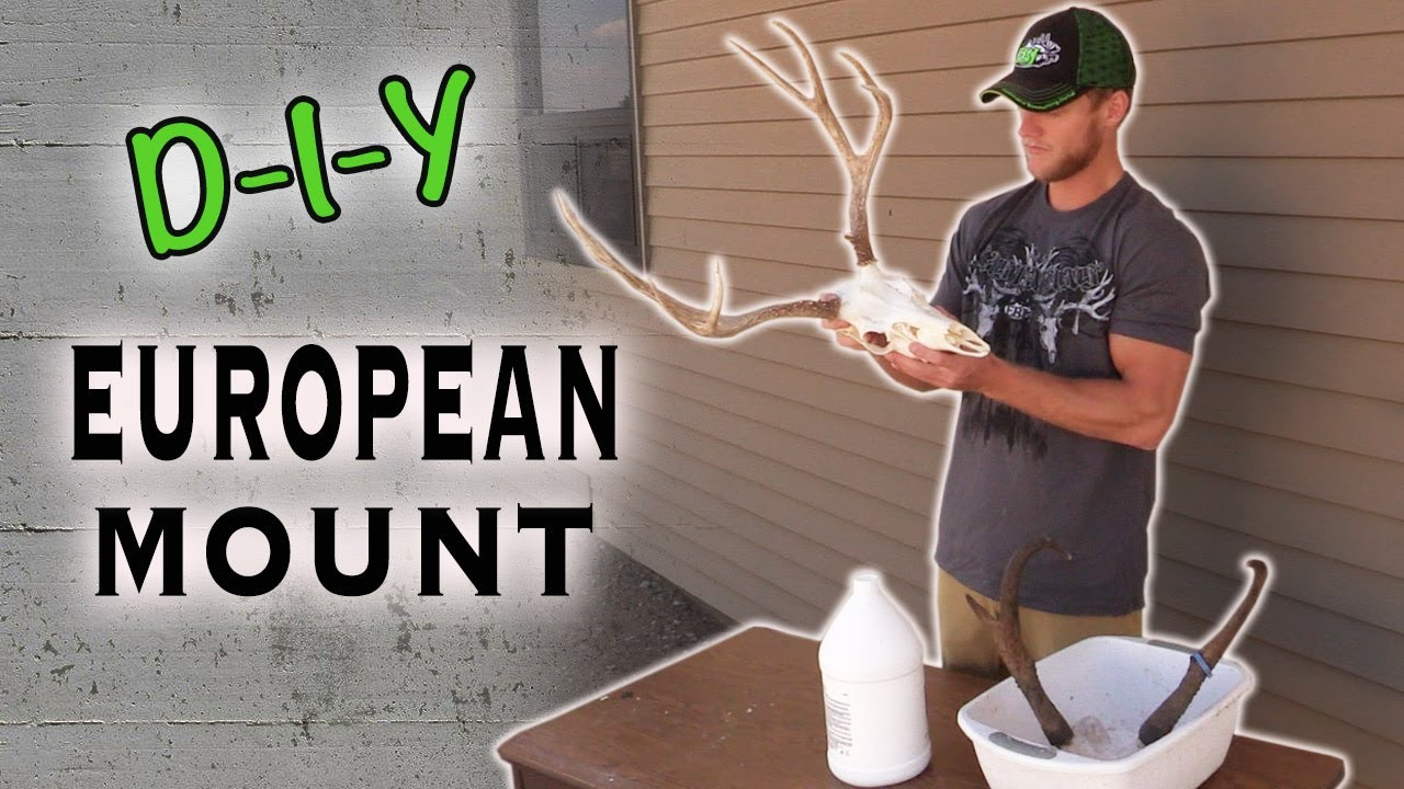 Skull cleaning do it yourself big game european mount youtube solutioingenieria Image collections
