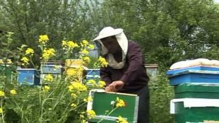Arıçılıq