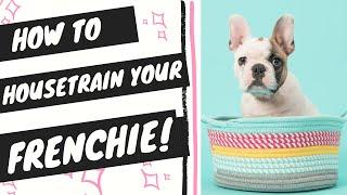House train french bulldog (stepbystep potty training instructions)