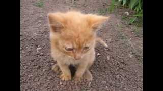 Котёнок какает.wmv