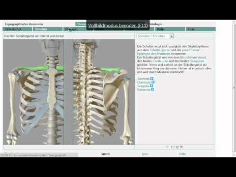 Anatomie: Obere Extremität 3/11 (Grobe Übersicht!) - YouTube
