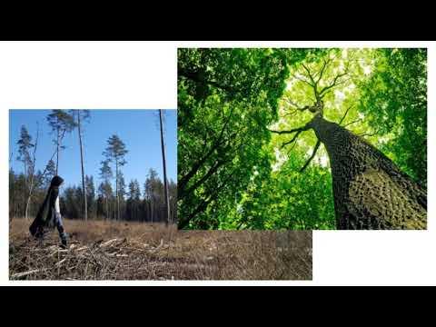 Kokius miškus norime matyt rytoj? GYVAS MIŠKAS, Monika Peldavičiūtė, 2018 03 26 Seime