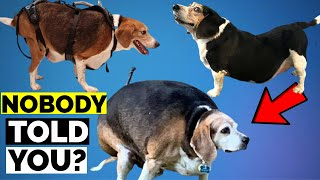 Worst Mistake | 15 Reasons Why Beagles Are The Worst Dogs To Live With| 15 Worst Beagle Facts