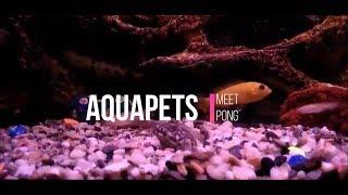 AQUAPETS: Meet Pong