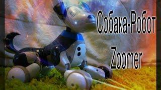 Собака-Робот Zoomer(зумер)