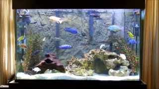 Jay Wilsons 2000 Subscriber Contest Entry! SEC South East Cichlids