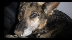 Hund in der Wetterau ausgesetzt - unendliche Qualen   maintower
