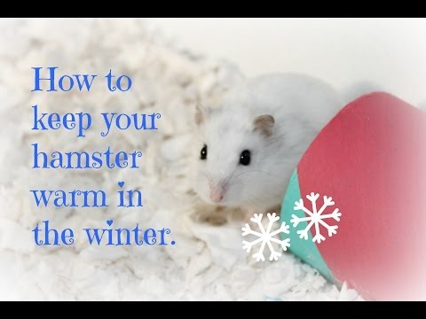 Keeping your hamster warm in the Winter