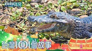 地球最大鱷魚族群 濕地成功復育瀕危凱門鱷 Saving Jaguar: The king of the jungle part3 台灣1001個故事|白心儀