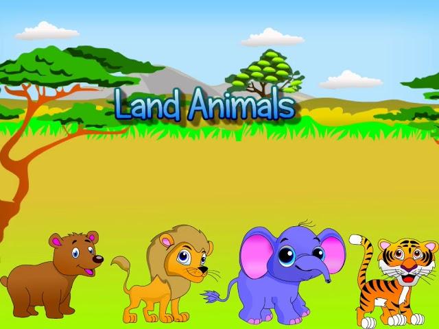 Clip animal Animal Video