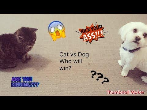 DOG VS CAT WHO WILL WIN?