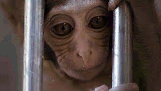 Жизнь учёных и обезьян в Абхазии | РЕАЛЬНОЕ КИНО